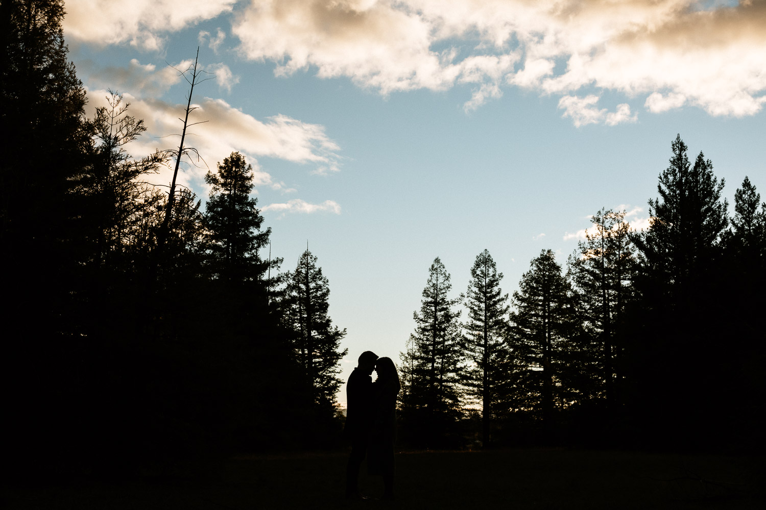 canberra-engagement-photographer-natural-candid-documentary-portrait-couple-pialligo-redwood-forest-silhouette-moody-dark