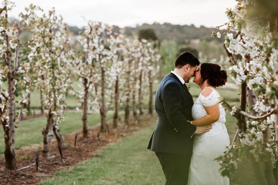 cherry-blossoms-canberra-photography-pialligo-estate
